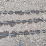 drip  line irrigation
